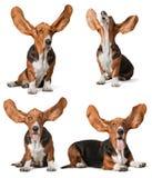 orelhas imagens de stock