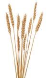 Orelhas de milho Fotografia de Stock