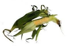 Orelhas de milho Foto de Stock Royalty Free