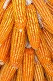 Orelhas de milho Imagens de Stock