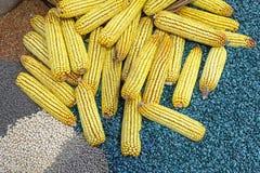 Orelhas de milho Fotos de Stock