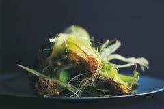 Orelhas de milho doce Imagens de Stock