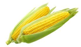 Orelhas de milho doce dobro isoladas no fundo branco Foto de Stock