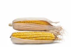 Orelhas de milho em um fundo branco Fotografia de Stock Royalty Free