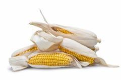 Orelhas de milho em um fundo branco Fotografia de Stock