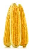 Orelhas de milho em um fundo branco Fotos de Stock Royalty Free