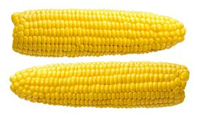 2 orelhas de milho nenhumas folhas isoladas no branco Fotos de Stock