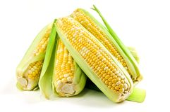 Orelhas de milho no fundo branco Fotografia de Stock Royalty Free
