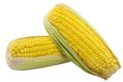 Orelhas de milho no fundo branco Imagem de Stock