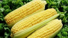 Orelhas de milho no verde vídeos de arquivo