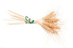 Orelhas do centeio Imagens de Stock