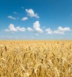 Orelhas do ouro do trigo sob o céu foto de stock royalty free