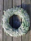 Orelhas do ` s do cordeiro de Gardenlife Imagem de Stock Royalty Free