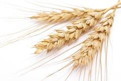 Orelhas do trigo imagens de stock