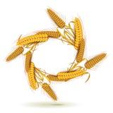 Orelhas do trigo ilustração stock