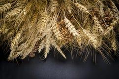 Orelhas do trigo, centeio, pshenici do painço montado no ramalhete imagens de stock