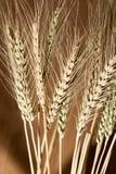 Orelhas do trigo como o fundo imagem de stock