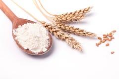 Orelhas do trigo e da farinha no fundo branco Imagens de Stock