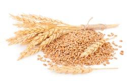 Orelhas do trigo e das grões do trigo imagens de stock royalty free