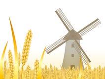 Orelhas do trigo em um fundo branco para a paisagem ilustração royalty free
