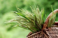 Orelhas do trigo em uma cesta de vime fora Imagens de Stock