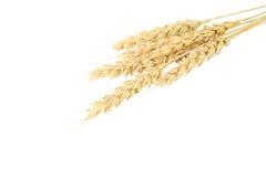 Orelhas do trigo isoladas no branco Foto de Stock