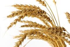 Orelhas do trigo isoladas no branco Imagens de Stock