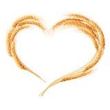 Orelhas do trigo isoladas no fundo branco Imagem de Stock