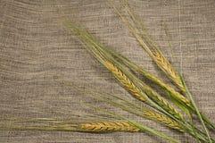 Orelhas do trigo na lona Foto de Stock