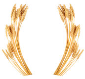Orelhas do trigo Quadro foto de stock royalty free