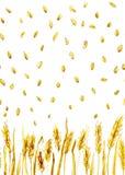 Orelhas e grões do trigo ilustração stock