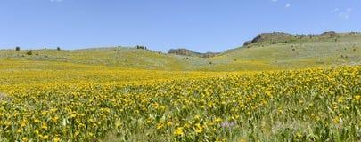 Orelhas e Lupine das mulas que colorem os montanheses de Idaho do sudoeste e de Oregon do sudeste fotografia de stock royalty free