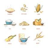 Orelhas maduras dos desenhos animados dos cereais, grupo do vetor das plantas do campo Fotos de Stock Royalty Free
