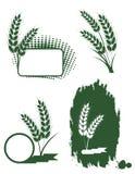 Orelhas verdes do trigo ilustração royalty free