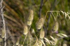 Oren van inheems gras in torndirrup nationaal park stock afbeeldingen