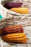 Oren van maïs royalty-vrije stock fotografie