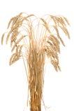 Oren van rijpe tarwe op een witte achtergrond Stock Foto's