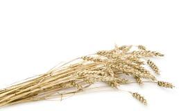 Oren van tarwe. Stock Foto