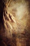 Oren van tarwe royalty-vrije stock afbeelding