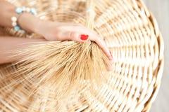 Oren van tarwe in de handen Stock Afbeelding