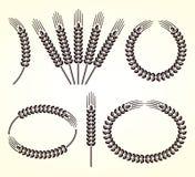 Oren van tarwe en roggereeks Vector Stock Afbeelding