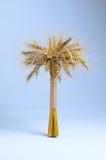 Oren van tarwe op een witte die achtergrond in bundels wordt verzameld Royalty-vrije Stock Fotografie