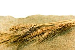 Oren van tarwe op textiel Stock Foto