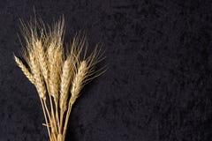 Oren van tarwe op zwarte Stock Afbeelding