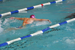 Orenburg, Rússia - 13 de novembro de 2016: As meninas competem no estilo da borboleta da natação Fotografia de Stock Royalty Free