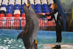 Orenburg, Rusland - November 8, het jaar van 2017: toon dolfijnen in Dolphinarium Stock Afbeeldingen