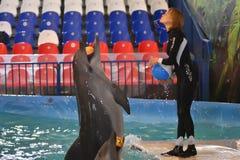 Orenburg, Rusland - November 8, het jaar van 2017: toon dolfijnen in Dolphinarium Stock Foto's