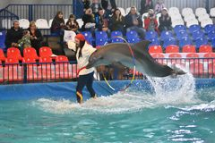Free Orenburg, Russia - November 8, 2017 Year: Show Dolphins In The Dolphinarium Stock Images - 104550314