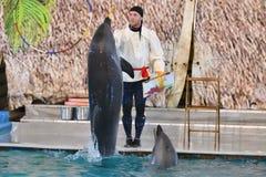 Orenburg, Russia - 15 ottobre 2017 anno: Delfini e Belukha (LAT Delphinapterus leucas) nel Dolphinarium Fotografia Stock Libera da Diritti