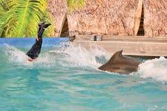 Orenburg, Russia - 15 ottobre 2017 anno: Istruttore dei delfini e dei delfini Immagini Stock